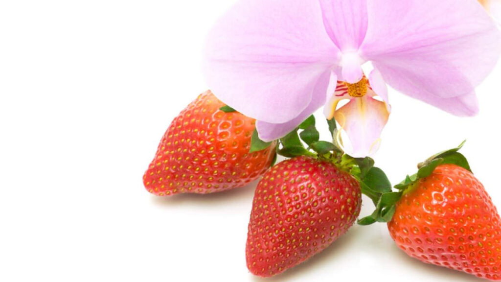 CO2 GRO announces commercial feasibility study with Netherlands-based Satter Orchids