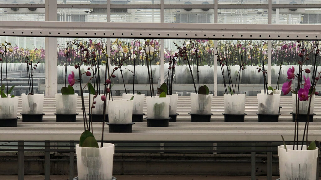 Satter Orchids afleversysteem delivery systeem