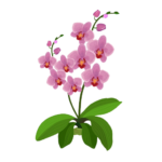 orchid35_2